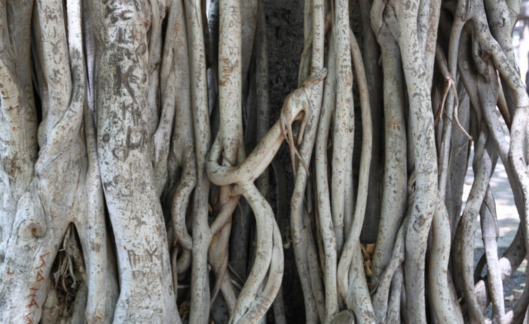 cropped-roots.jpg
